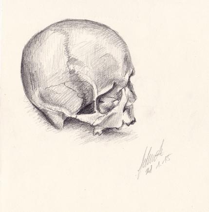 Anatomie (Pluskurs Kunst 2014/2015)