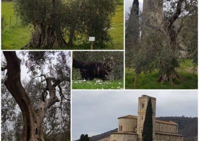 Abbazia_di_Sant_Antimo_Colllage